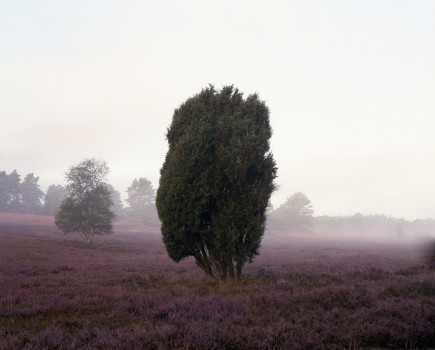 Die Heide – Erinnerungsschichten einer historischen Kulturlandschaft
